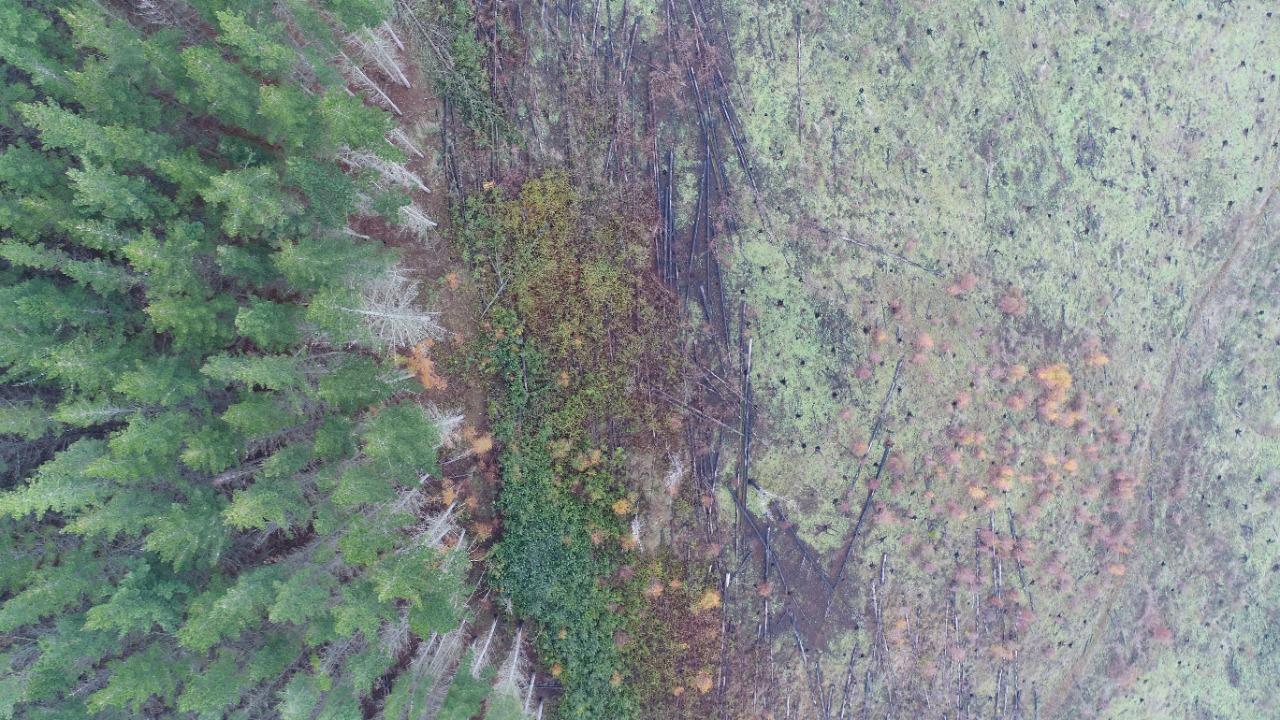 Forestales en Lumaco. Fotografía Pablo Mansilla