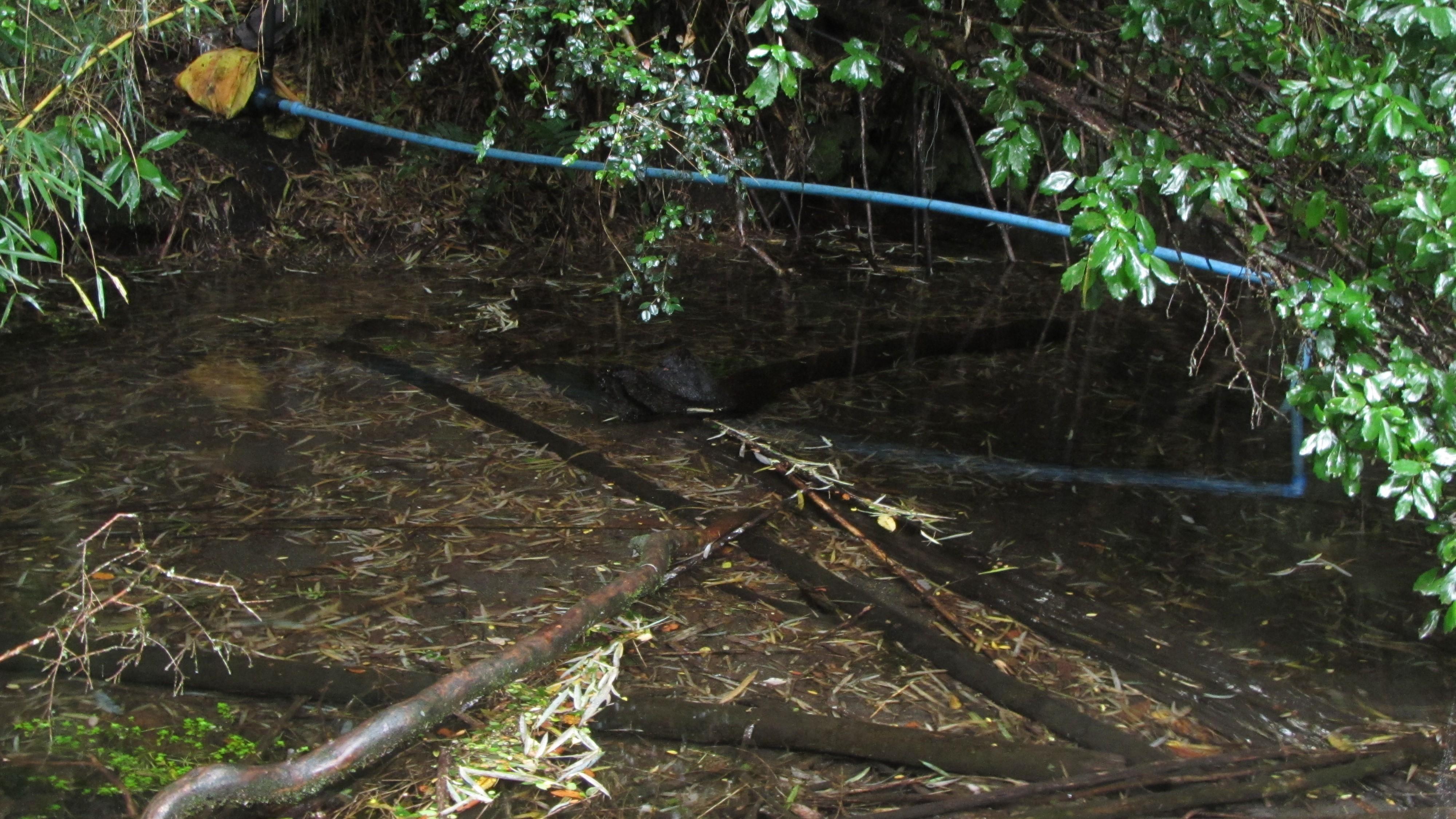 Bomba de agua que abastece a parte de la comunidad Mariano Millahual