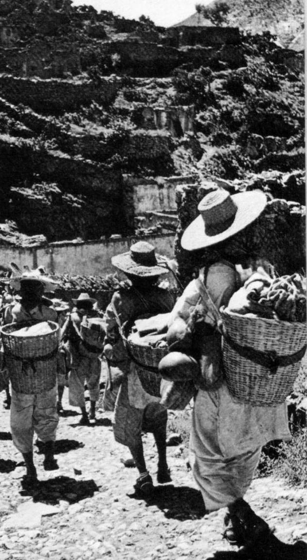 Peregrinos mexicanos regresan del desierto de Zacatecas cargando canastas repletas con el sagrado peyote.