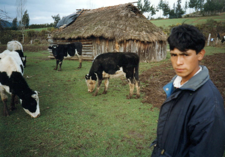 La ruca ocupó durante siglos entre 120 y 140 metros cuadrados, donde podían convivir hasta cien personas. Hoy, sus habitantes no son, en promedio, más de cuatro. Fotografía de Nelson Muñoz Mera.