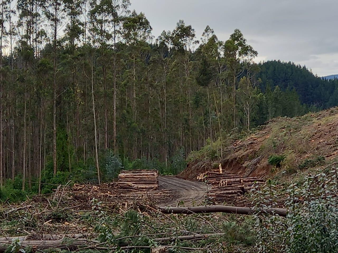 Fundo Santa Ana de Forestal Mininco