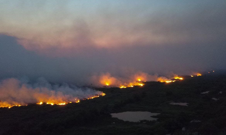 Con Bolsonaro como presidente, Ibama impuso menos multas en Brasil; incluso teniendo un récord en los incendios y la deforestación (Foto: Chico Ribeiro/Gobierno MT)