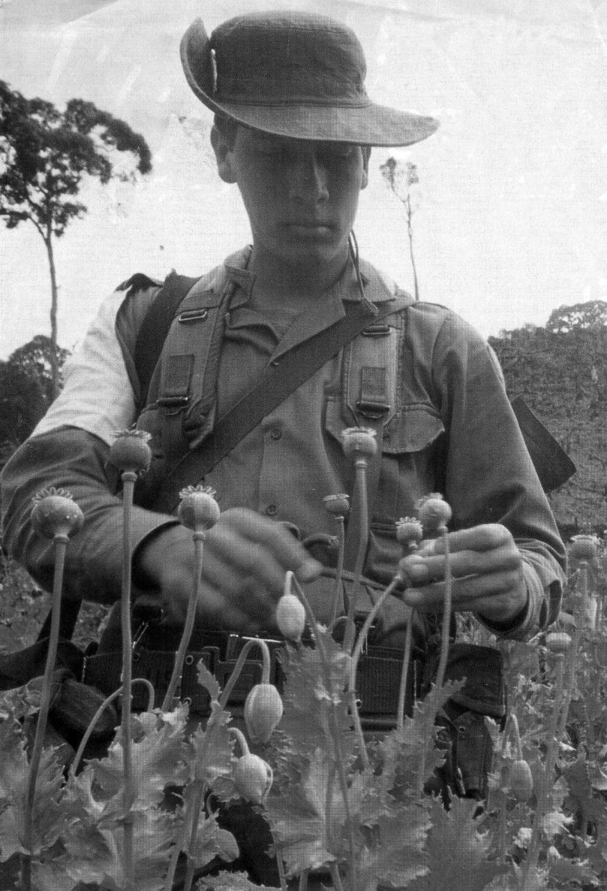 Los cultivos de amapola ingresaron a Colombia a mediados de la década de 1980.
