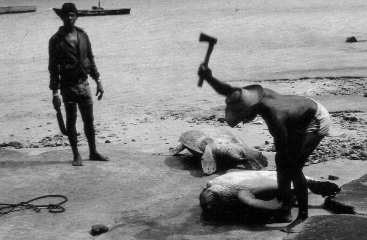 El tráfico de animales, de pieles y carnes exóticas, es una de las industrias ilegales más redituables en el mundo.