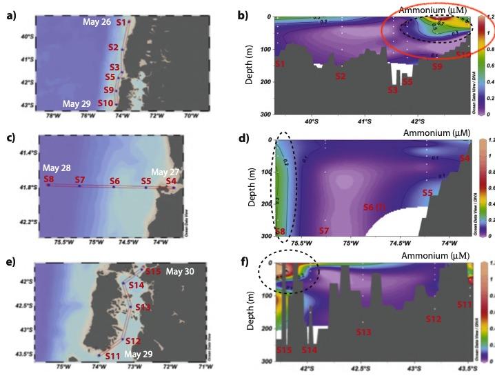 Mancha de amonio detectada y no explicada por la Comisión Marea Roja