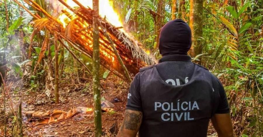 """La operación de agosto de 2020 destruyó miles de plantas de marihuana en el noreste de Pará, en la zona denominada """"polígono de la marihuana"""""""