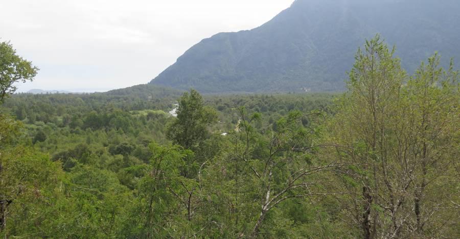 Terrenos de la Comunidad Mariano Millahual en Pucón / Interferencia