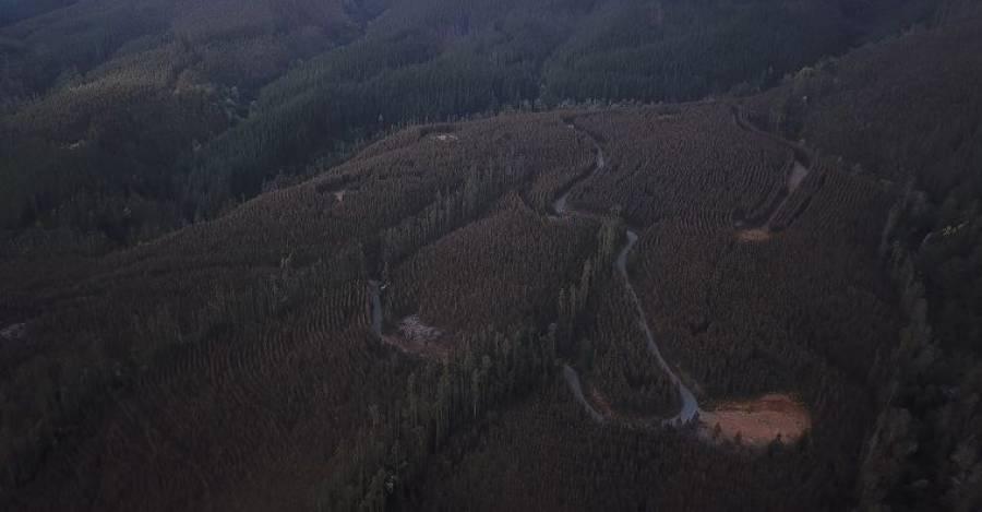 Foto referencial: Monocultivo forestal en la provincia de Arauco (Resumen)