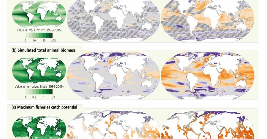Imagen de IPCC de la ONU con simulaciones de producción primaria, biomasa animal total y potencial de captura pesquera