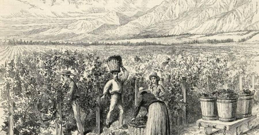 Una viña en los alrededores de Santiago.
