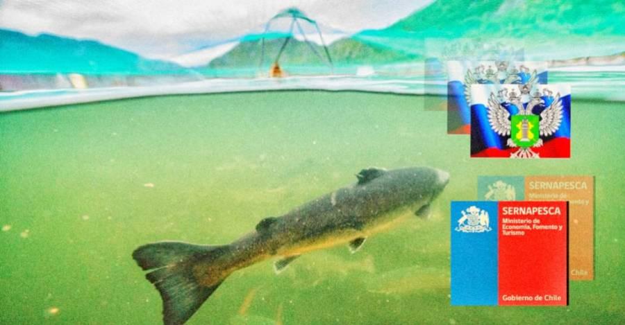 De fondo, salmón en criadero chileno. Fuente: Ladera Sur. Encima los escudos de Rosselkhoznadzor y Sernapesca.