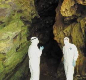 Científicos de EcoHealth Alliance buscan patógenos en una cueva de murciélagos de Yunnan, China.
