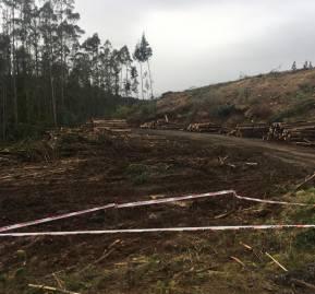 Forestal Mininco, a pocos metros donde habría muerto Marchant. Registro Paula Huenchumil y Francisco Velásquez