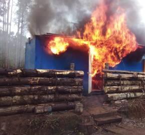 Fundo de Forestal Mininco en Carahue