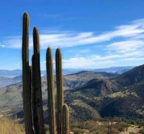 Bosque esclerófilo de Lo Barnechea y Colina, dónde cuatro proyectos inmobiliarios se están desarrollando irregularmente