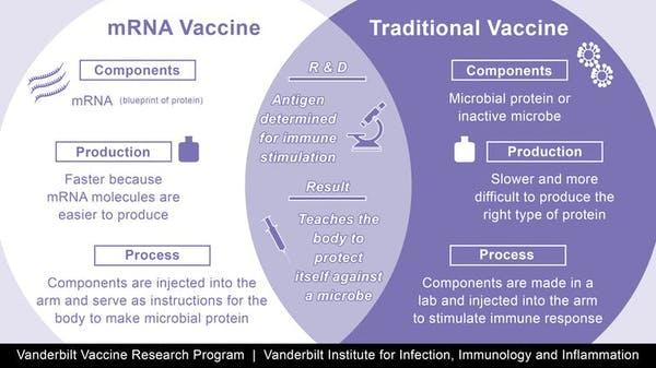 Las vacunas ayudan a que el sistema inmune reconozca a los virus, al inyectar el virus debilitado o las proteínas del virus. En cambio, las vacunas de Pfizer y de Moderna usan el ARNm, las instrucciones moleculares para construir las proteínas del virus.